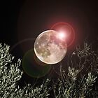 Super Moon August 2014 by MJDphotography