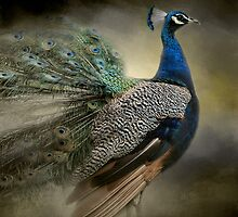 Peacock From The Past - Wildlife by Jai Johnson