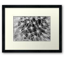 Dandelion #5 Framed Print