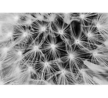 Dandelion #5 Photographic Print