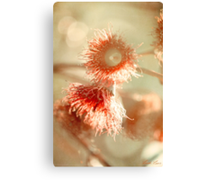 Blossom and Bokeh Canvas Print