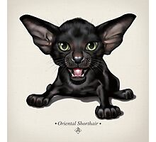 Cataclysm: Oriental Shorthair Kitten - Classic Canvas Photographic Print