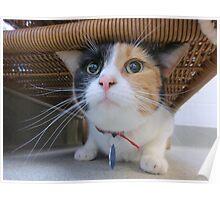 Calico Cat for Adoption Poster