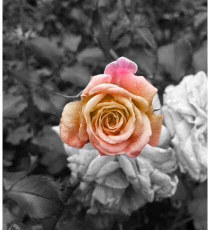 The Last Rose Sticker