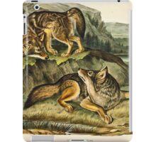 John James Audubon - Canis latrans, Say  Prairie Wolf  Males  1 3 Natural Size1845  iPad Case/Skin