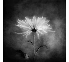 Autumn Mum in Black and White Photographic Print