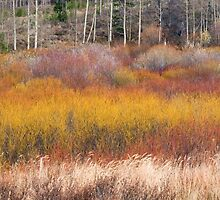 Colors of fall by Eivor Kuchta