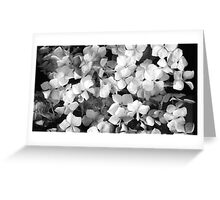 Scanned Floral Design - Hydrangea  Greeting Card