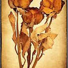 Old Roses by Hans Kawitzki