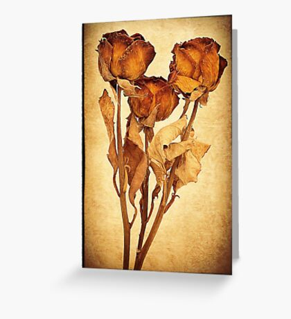 Old Roses Greeting Card