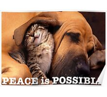 Peace is possible Poster