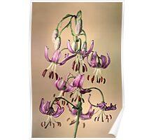 Martagon lily Poster