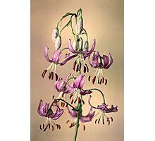 Martagon lily Photographic Print
