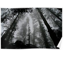 Creepy Forest Poster