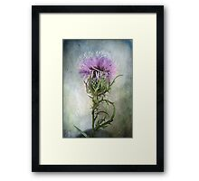 Spurred with many thorns ... Purple Thistle Framed Print