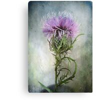 Spurred with many thorns ... Purple Thistle Canvas Print