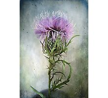 Spurred with many thorns ... Purple Thistle Photographic Print