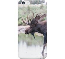 Thirsty moose a Thursday morning iPhone Case/Skin