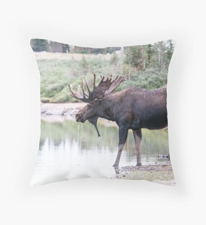 Thirsty moose a Thursday morning Throw Pillow