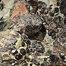 On the rocks by Arie Koene