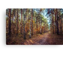 Pathway In The Autumn Forest Canvas Print