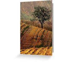 Carpet fields Greeting Card