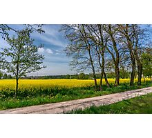 Country Road In The Rapeseed Field Photographic Print
