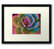 Pink Succulent Framed Print