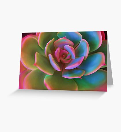 Pink Succulent Greeting Card