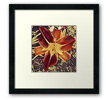 Star flower K1 Framed Print