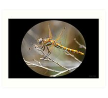 The Yellow Dragonfly Art Print
