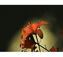 Tiger Lily-  Photographic Print