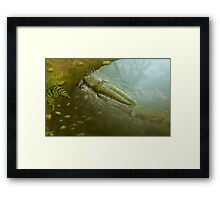 Attack of the Fire Frog Framed Print