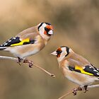European Goldfinches by M.S. Photography & Art
