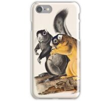 John James Audubon - Sciurus capistratus, Bos Fox Squirrel 1845  iPhone Case/Skin