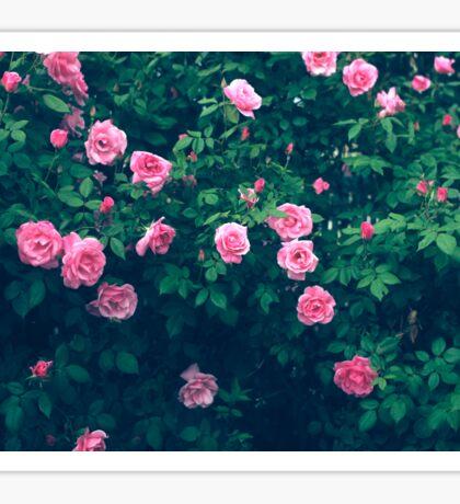 Rose Bush Sticker