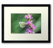 Butterfly in HDR Framed Print