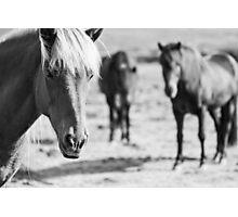 Horses Photographic Print