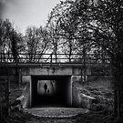 Walking The Dog by Nigel Bangert