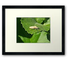 Insect on a green leaf Framed Print