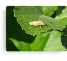 Insect on a green leaf Canvas Print