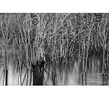 Wind in the Marsh Photographic Print