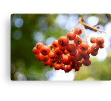 The Fruit of the Berry Metal Print