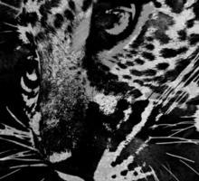 Leopard Cub Sticker
