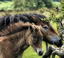 Exmoor Foal and Mare by judeatkins
