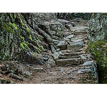 Stairway in the Forest Photographic Print