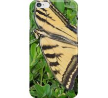 A perfect landing....... iPhone Case/Skin
