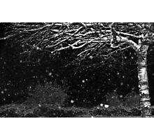 Black and White Winter Photographic Print