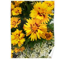 Coreopsis and Sweet Alyssum Poster
