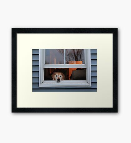 Watching the World. Framed Print